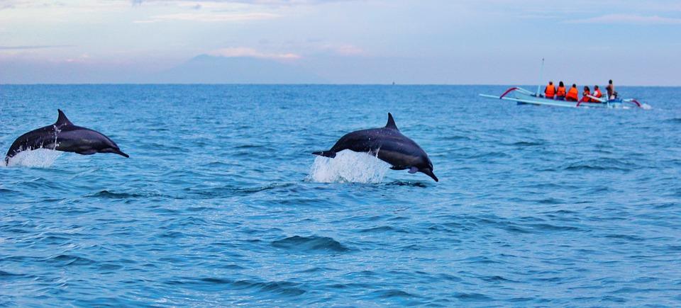 Bali delphine